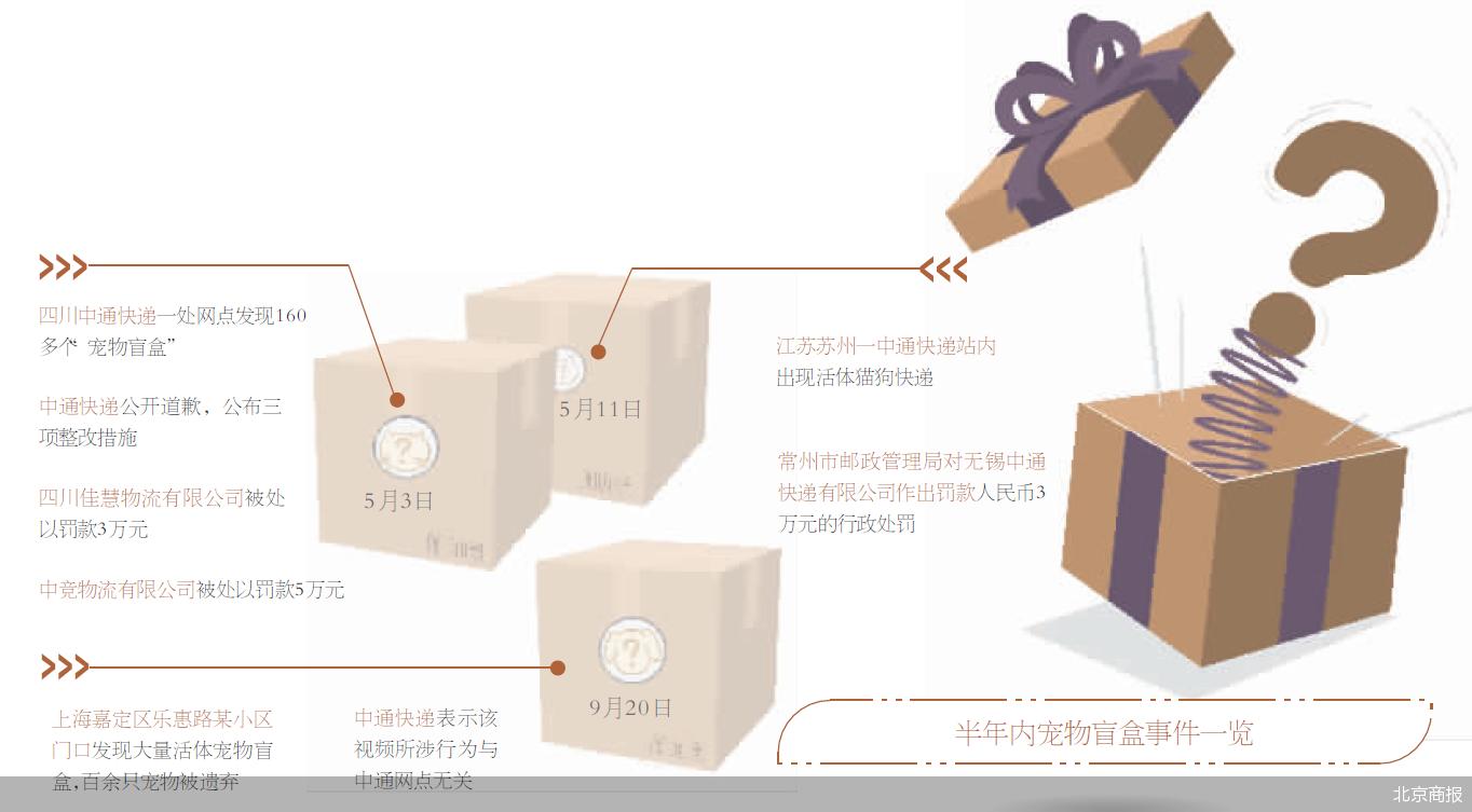 上海再现宠物盲盒 是谁在玩猫鼠游戏